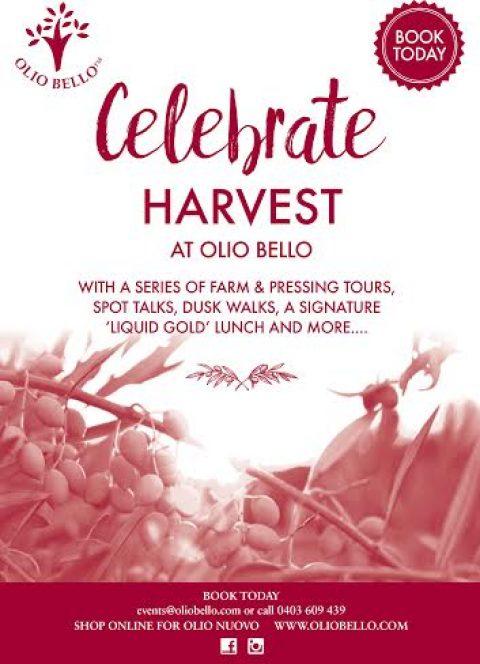 Harvest time at Olio Bello!