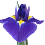 Profile picture of Iris Naturopathic and Skin Clinic